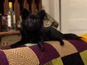 Nancy Collie's dog Moritz aka Momo