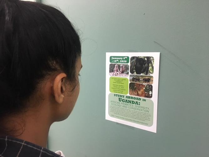 Hunter student looking at a study abroad poster.